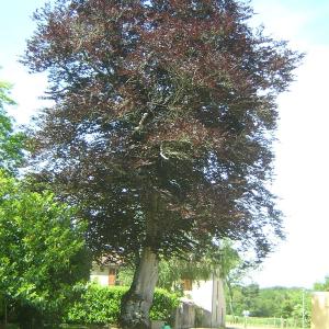 arbres givray