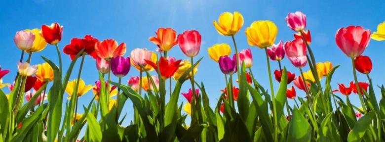 fete du printemps
